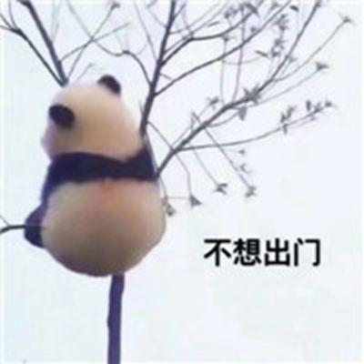超可爱小熊猫头像_WWW.QQYA.COM