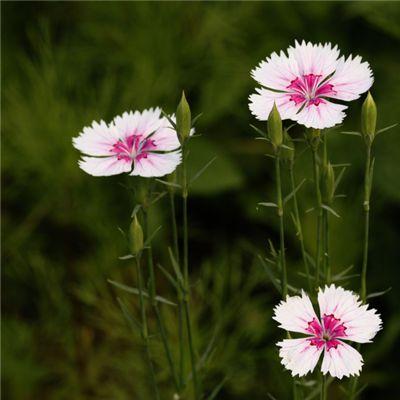 微信头像花朵图片真实唯美_WWW.QQYA.COM