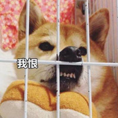 狗子恶搞逗比头像_WWW.QQYA.COM
