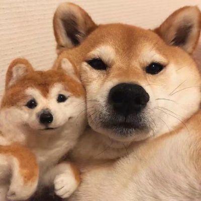 高清超萌可爱的一左一右动物情侣头像图片_WWW.QQYA.COM