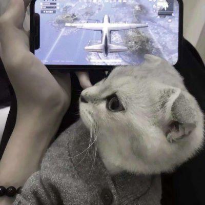 两只猫咪图片情侣头像_WWW.QQYA.COM