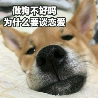 单身狗专属头像_WWW.QQYA.COM