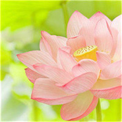 适合做头像的花朵头像_WWW.QQYA.COM