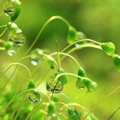 绿色意境微信头像_WWW.QQYA.COM