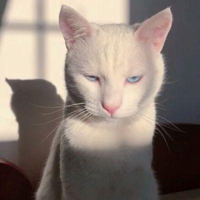 适合做头像的猫咪图片_WWW.QQYA.COM