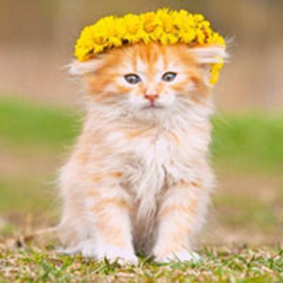 好看的动物可爱头像图片_WWW.QQYA.COM