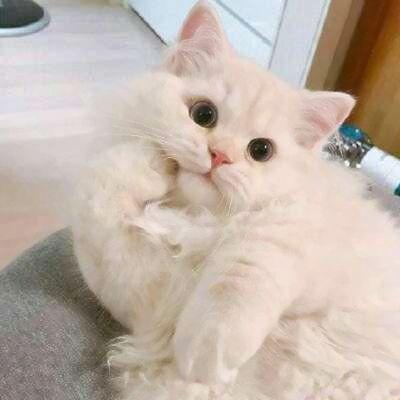 萌宠头像大全可爱_WWW.QQYA.COM