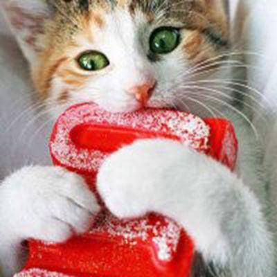 萌萌的猫咪可爱的猫咪头像_WWW.QQYA.COM