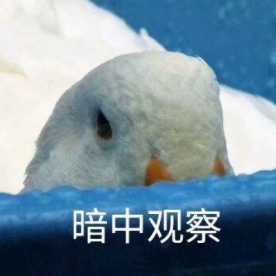 鸭鸭表情包头像_WWW.QQYA.COM