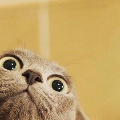 两只猫咪的情头_WWW.QQYA.COM