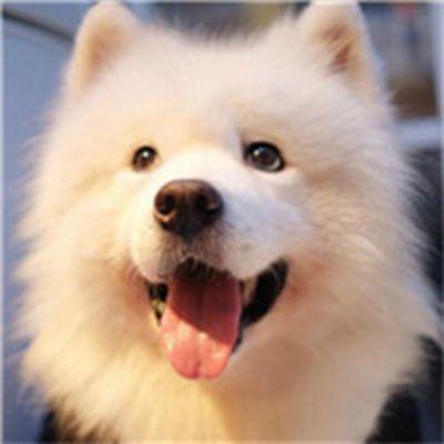 宠物狗照片萌萌哒头像_WWW.QQYA.COM