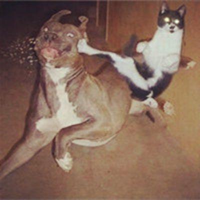 搞笑动物微信头像_WWW.QQYA.COM