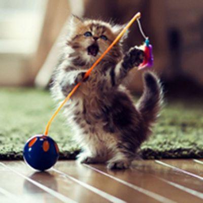 小猫咪微信头像_WWW.QQYA.COM