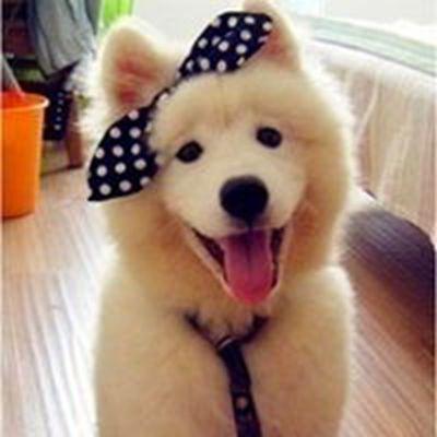 超可爱狗狗头像_WWW.QQYA.COM