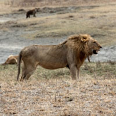 狮子头像_WWW.QQYA.COM