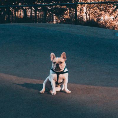 好看的狗狗微信头像_WWW.QQYA.COM