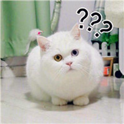 小猫头像图片大全可爱_WWW.QQYA.COM