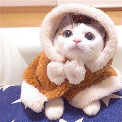 微信动物头像小猫咪可爱超萌_WWW.QQYA.COM