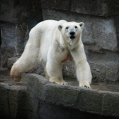 微信头像北极熊_WWW.QQYA.COM