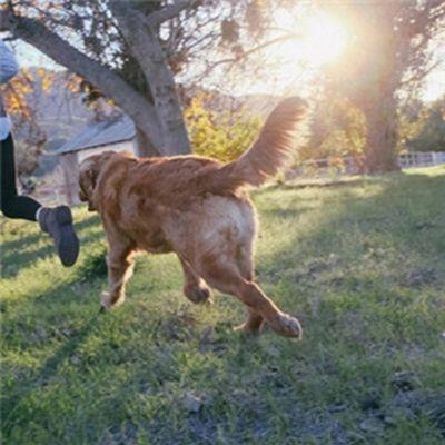 狗狗头像图片_WWW.QQYA.COM
