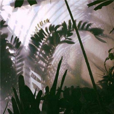 微信朋友圈绿色植物风景头像_WWW.QQYA.COM