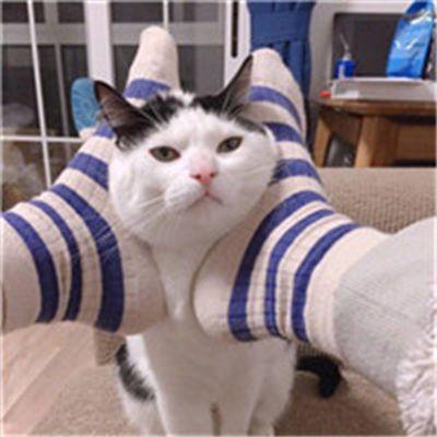 可爱动物情侣头像一对_WWW.QQYA.COM