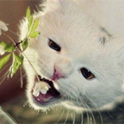 卖萌可爱小猫咪头像_WWW.QQYA.COM