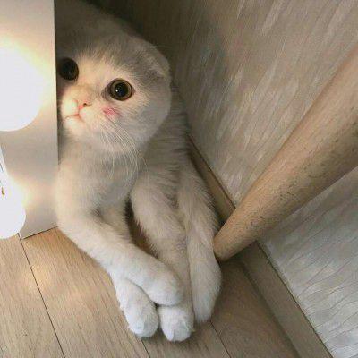 猫头像可爱微信头像_WWW.QQYA.COM