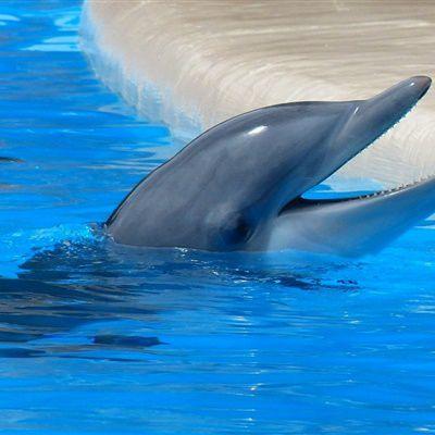 海豚可爱的头像_WWW.QQYA.COM
