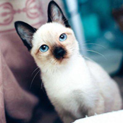 可爱小动物猫咪微信头像图片大全_WWW.QQYA.COM
