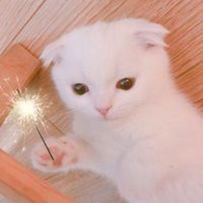 超萌的猫咪可爱微信头像大全_WWW.QQYA.COM
