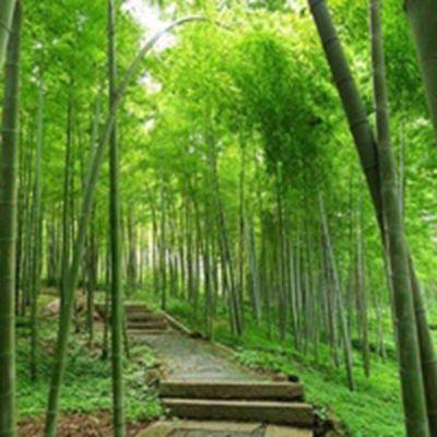 小清新竹子风景高清微信头像图片_WWW.QQYA.COM