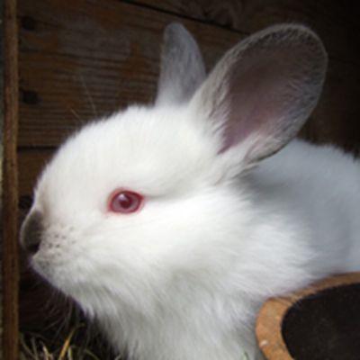 小白兔头像_WWW.QQYA.COM
