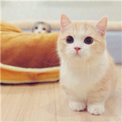 可爱小奶猫头像大全_WWW.QQYA.COM