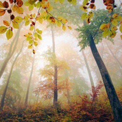 有诗情画意的唯美风景意境个性头像图片精选_WWW.QQYA.COM
