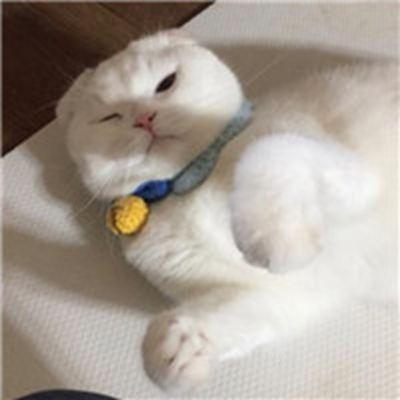 超好看宠物情侣头像_WWW.QQYA.COM