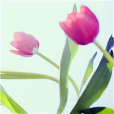 浪漫花朵头像图片大全_WWW.QQYA.COM