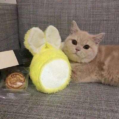 微信猫咪头像可爱高清头像_WWW.QQYA.COM