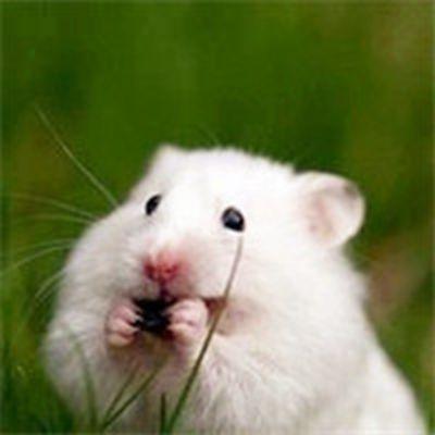 可爱仓鼠卖萌头像_WWW.QQYA.COM