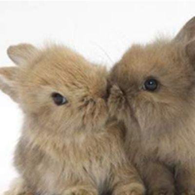 接吻(Kiss)各种接吻头像大全 静态_WWW.QQYA.COM