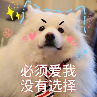 狗狗搞笑文字图片头像_WWW.QQYA.COM
