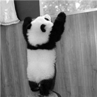 微信QQ可爱萌萌的熊猫头像_WWW.QQYA.COM