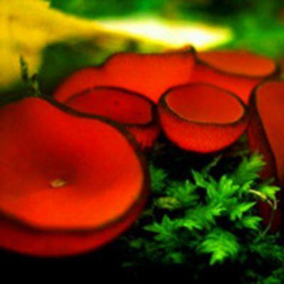 漂亮好看的各种各样qq蘑菇头像图片_WWW.QQYA.COM