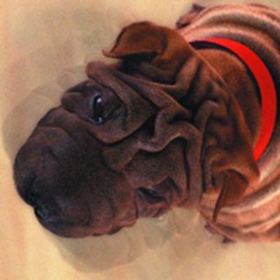 名犬微信头像图片_WWW.QQYA.COM