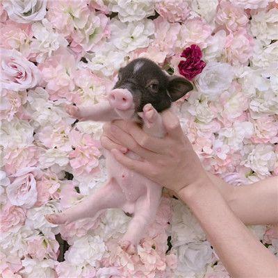 你真是我的掌上明猪头像最新版_WWW.QQYA.COM