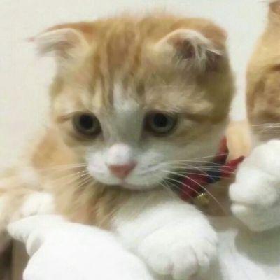可爱猫咪闺蜜头像_WWW.QQYA.COM