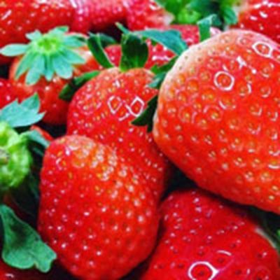 关于草莓的头像图片红红的草莓像什么_WWW.QQYA.COM
