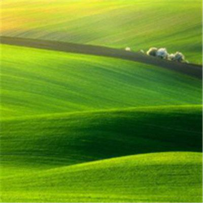 微信最吉利的好看头像绿色草原_WWW.QQYA.COM