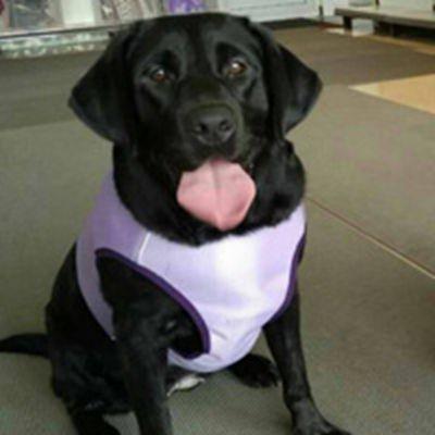 拉布拉多犬穿衣服的图片头像大全_WWW.QQYA.COM
