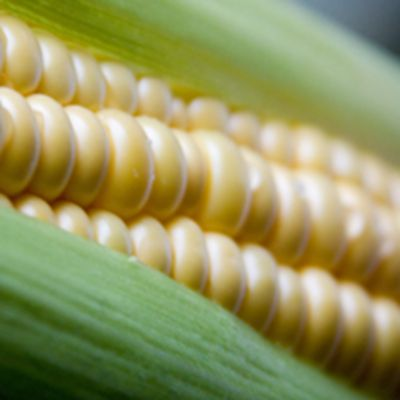 蔬菜玉米头像图片_WWW.QQYA.COM